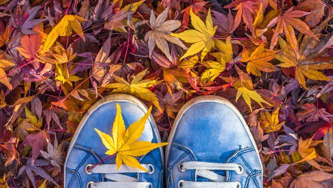 ¡El otoño ya está aquí! ¿Cómo tienes tus defensas?