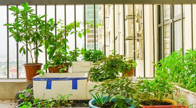 ¿Te atreves con un huerto urbano doméstico?