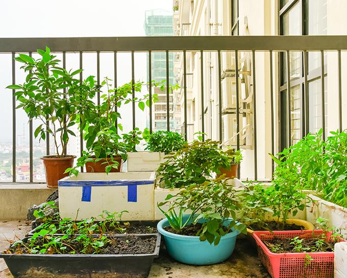 ¿Te atreves a cultivar un huerto urbano doméstico?
