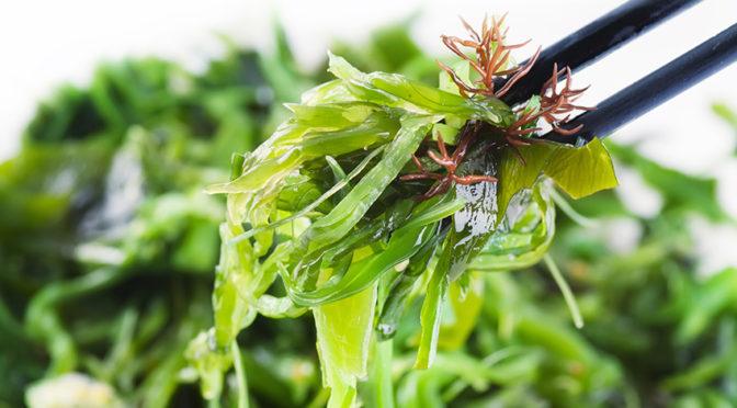 ¿Por qué debes incluir algas en tu dieta?