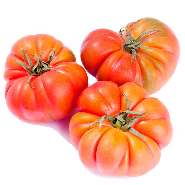 Tomate-Udagorri-Bio